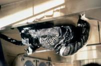 Alien3ceili