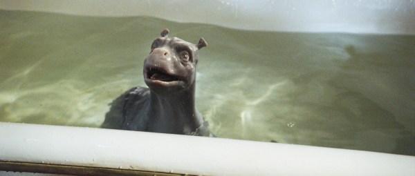 crusoepuppybath