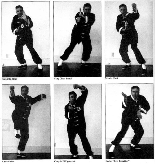 butterfly stances