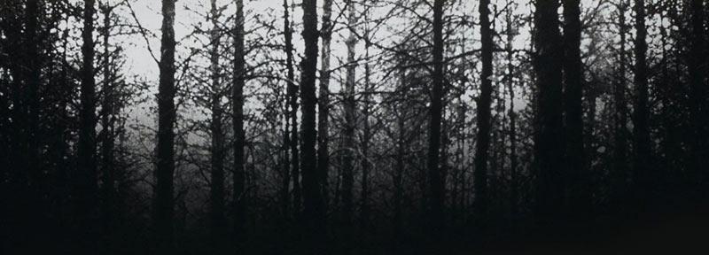Blair Witch Project sfondo del film con foresta