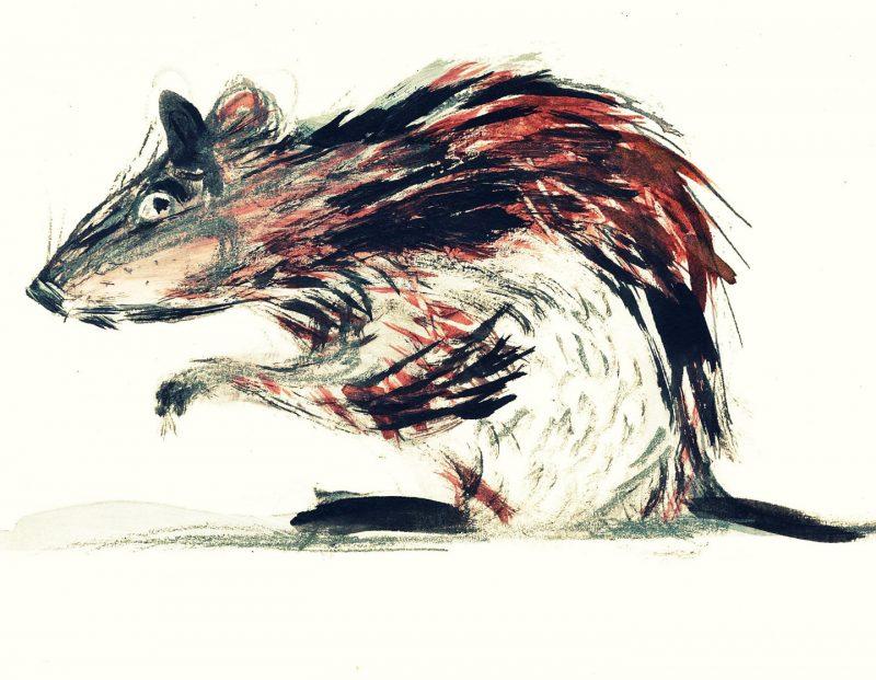Disegno del topo Crosta