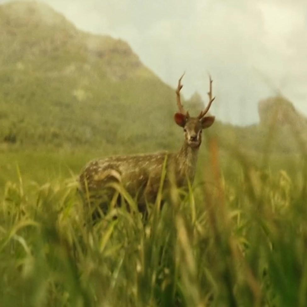Deer cervo normale