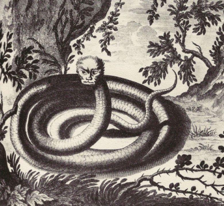 Magalasso serpente disegno