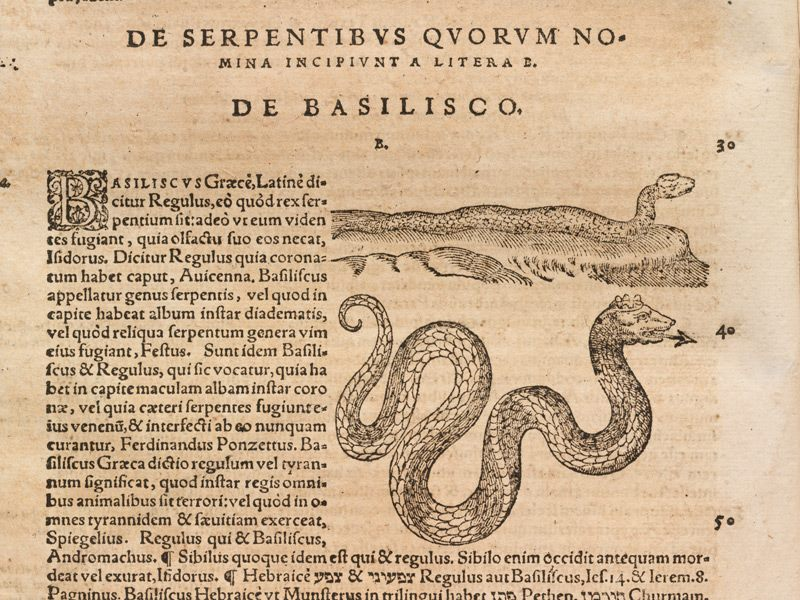 De Basilisco antico testo