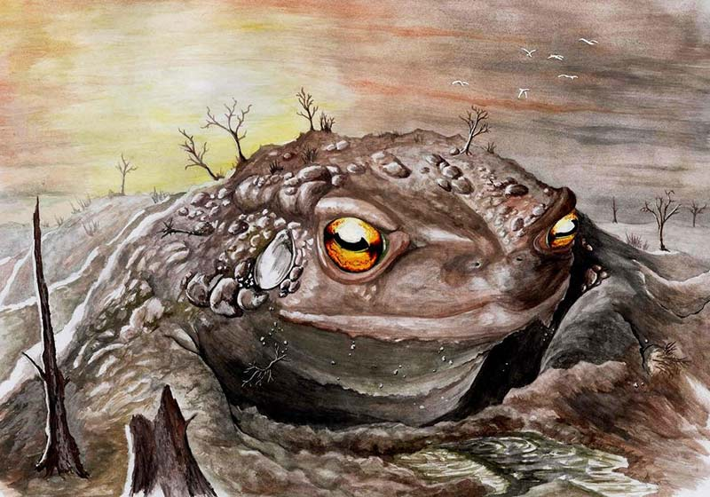 Scabodda rana gigante Toscana