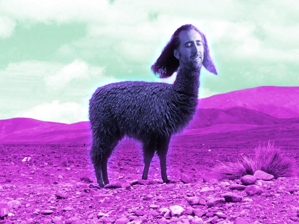 Nicolas Cage con corpo di alpaca