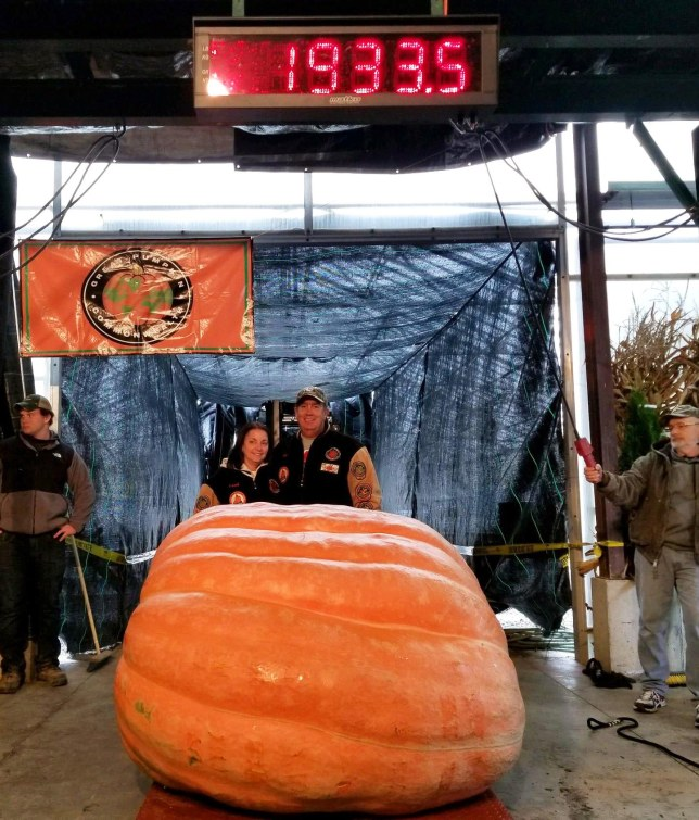 Dave Stelts with his 1,994 pound prize pumpkin