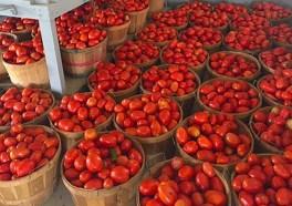 Bushels of Tomatos 2907