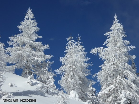 Mélèzes en hiver