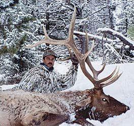 310 class bull elk