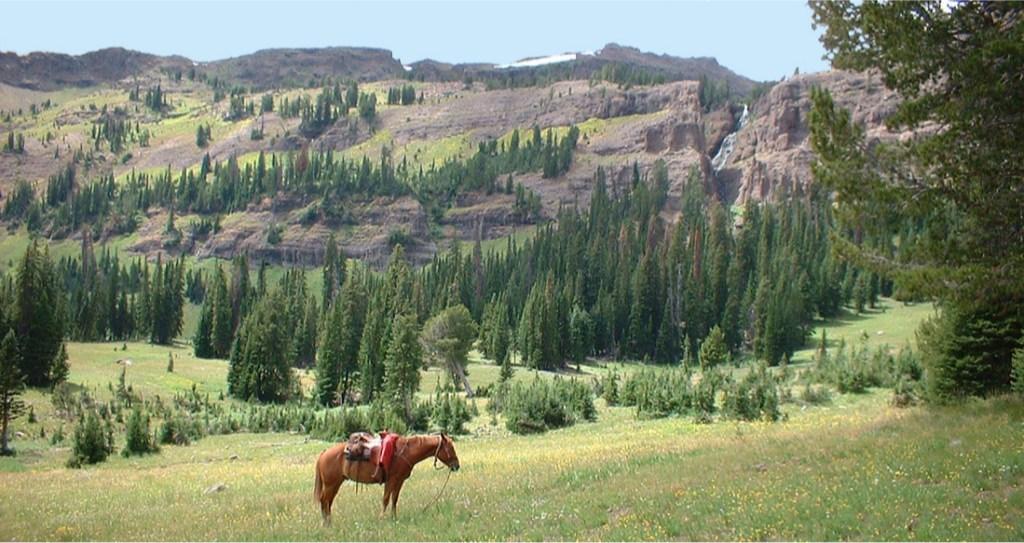 Saddle Horse in Alpine Basin
