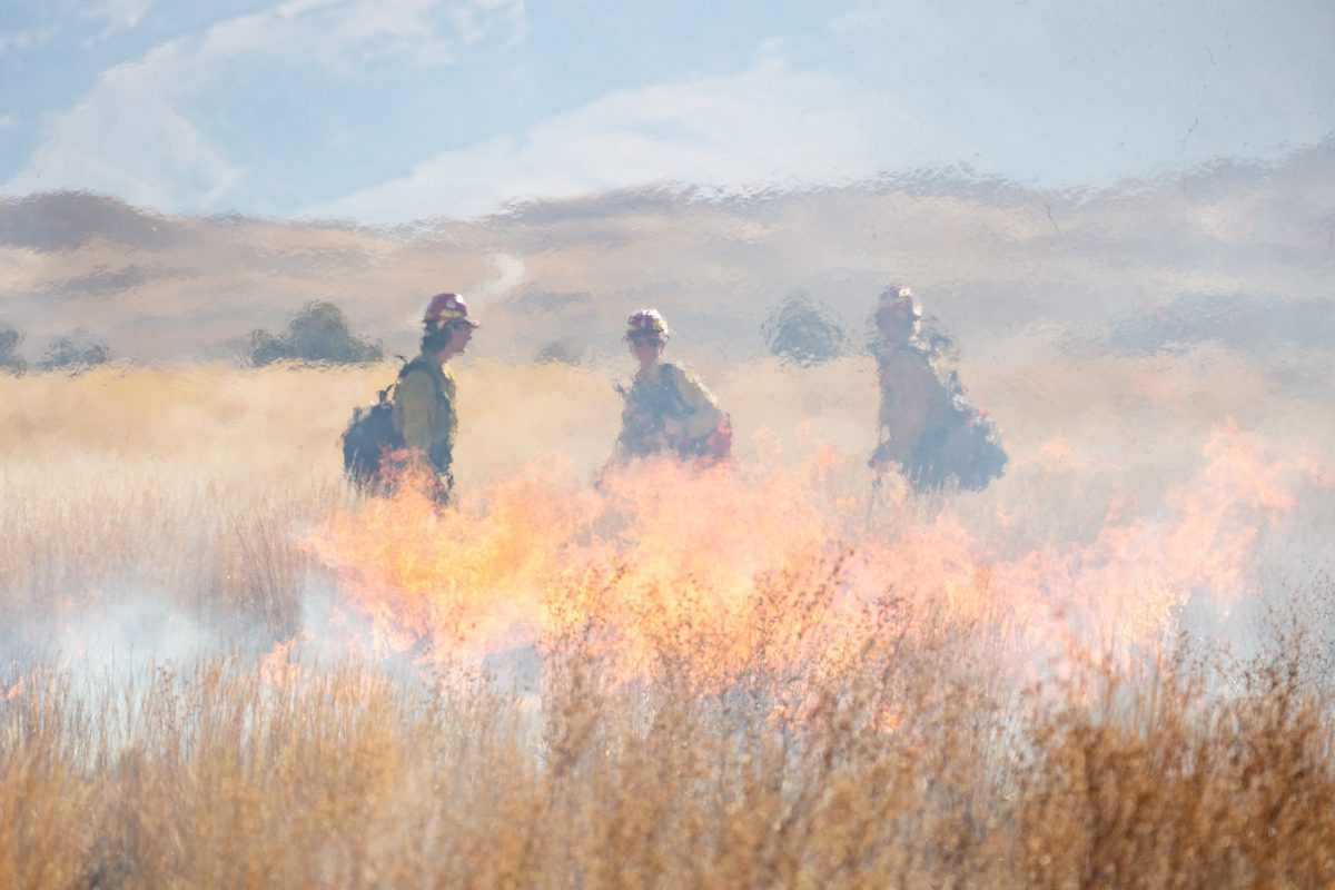 wildfire prescribed burn Yellowstone National Park