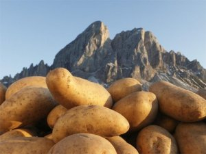 Kartoffelwoche - Settimana di Patate - Potato Week