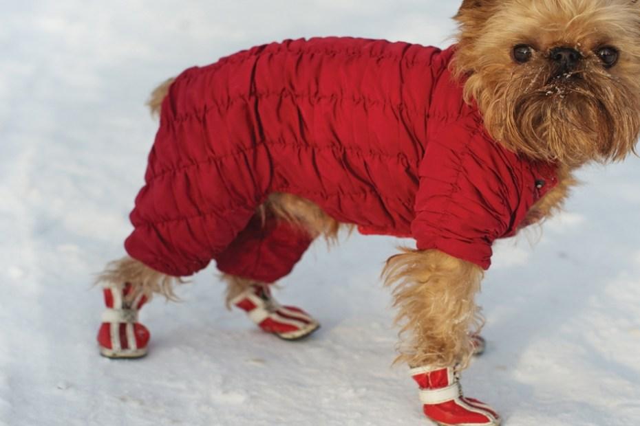 Winter Wardrobe for Dogs