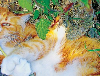 Montana Senior News: An Old Feline Friend