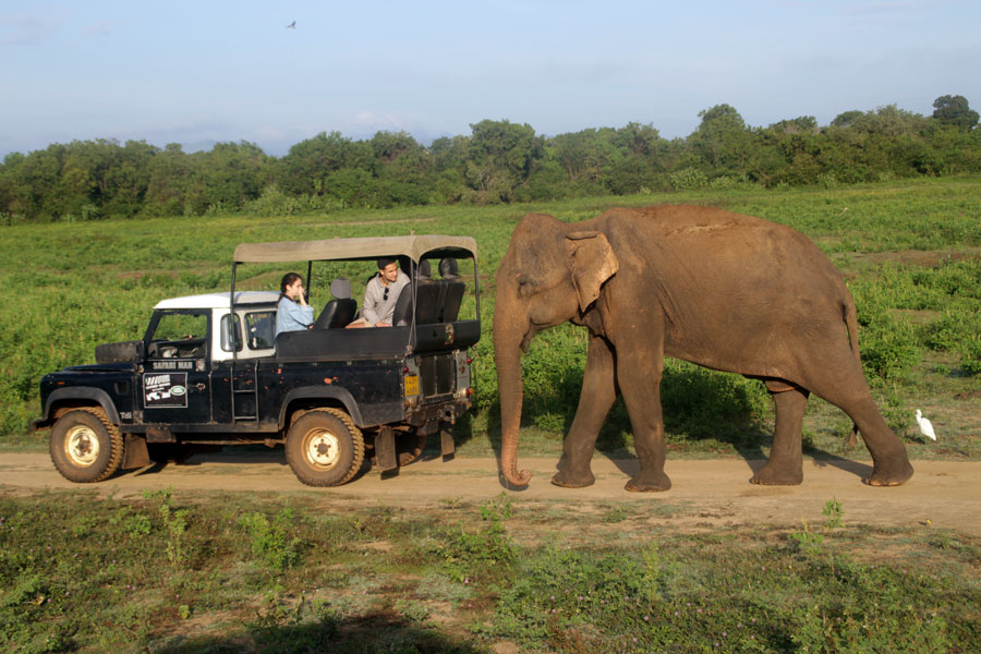 safari-sri-lanka