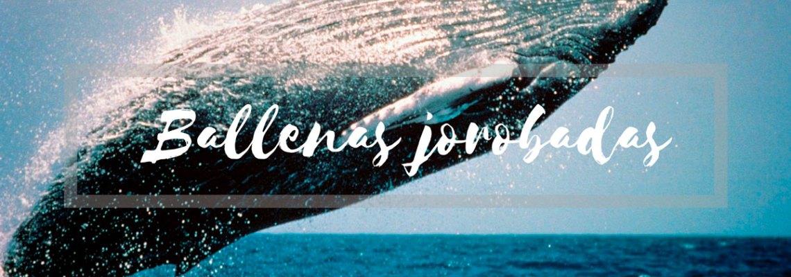 Guía para ver ballenas jorobadas en Colombia