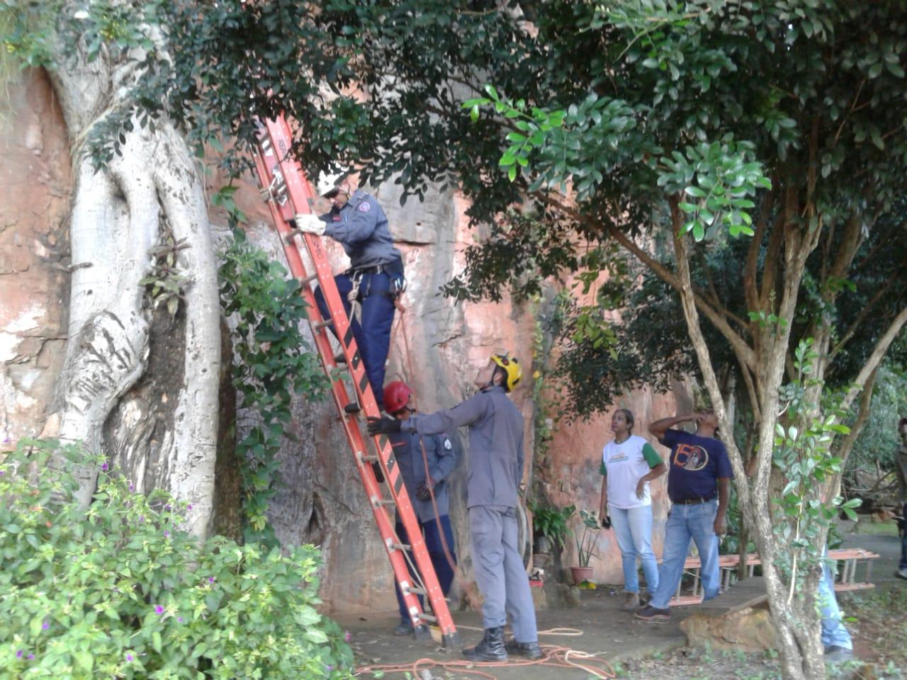 Corpo de Bombeiros inicia serviço de retirada das árvores na Gruta Lapa Velha