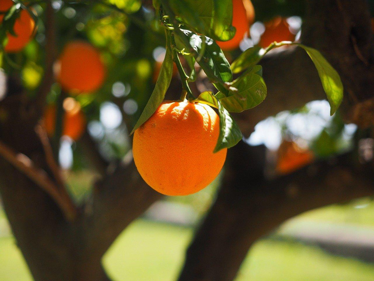 La alimentación sostenible: cinco consejos prácticos