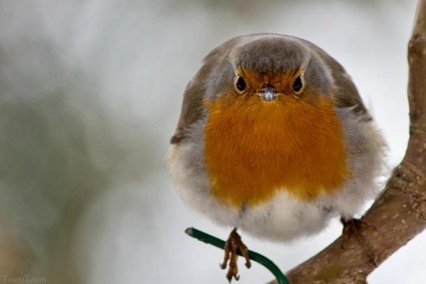 oiseau-mecontent
