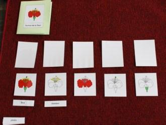 montessori-nomenclature2