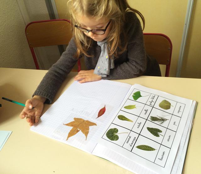 nature botanique montessori 8