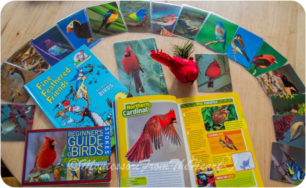 Birds of North America Books and Flash Cards