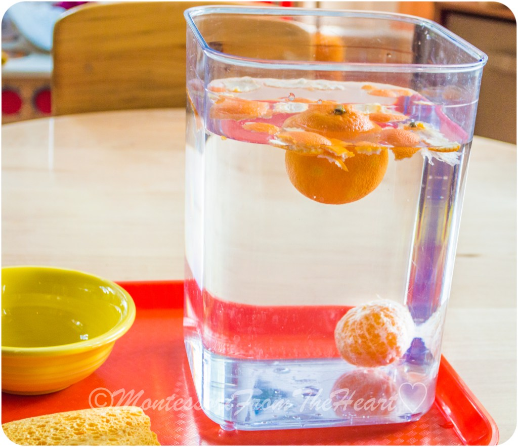 Sink-Float-Tangerine-Montessori-Science