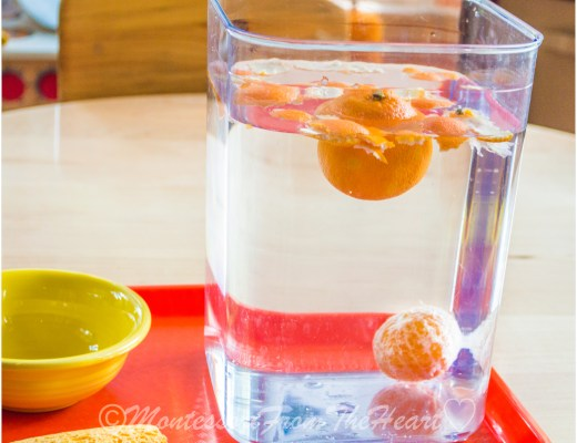 Sink-Float-Tangerine-Montessori-Science