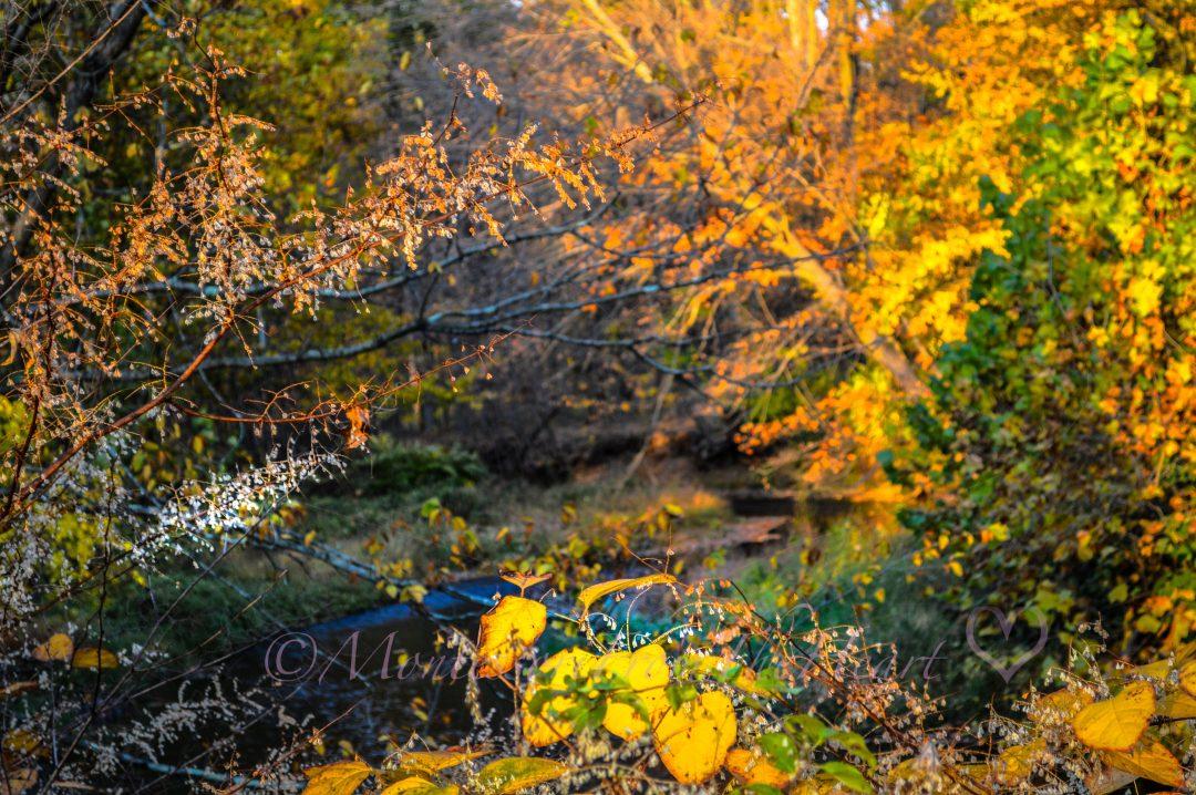Awesome Autumn Foliage