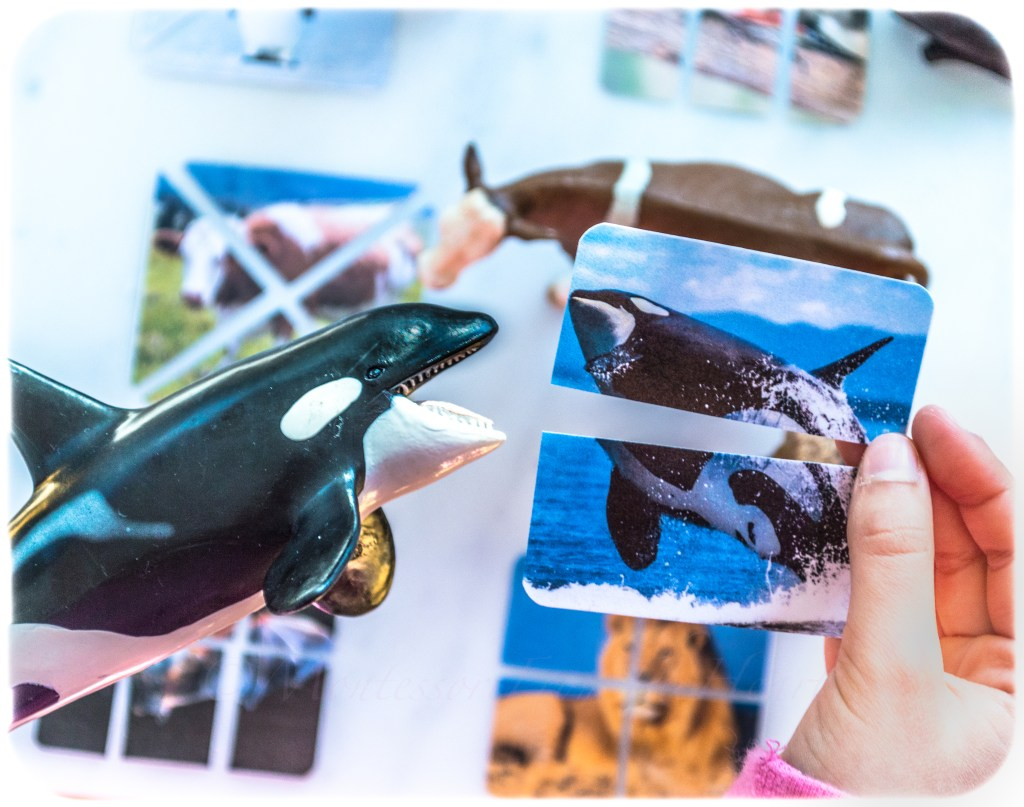 DIY-Picture-Puzzle-World-Whale-Day