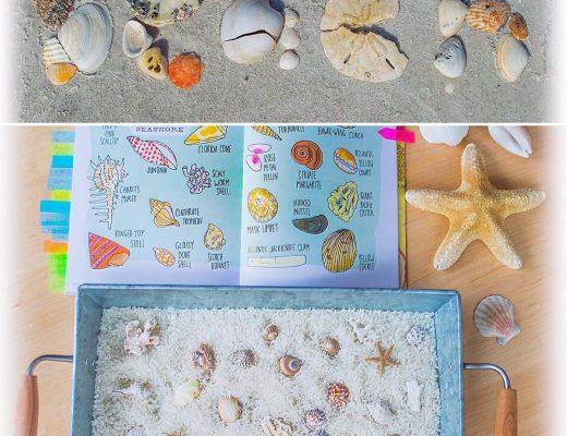 Seashells-Summer-Beach-Kids-Activities