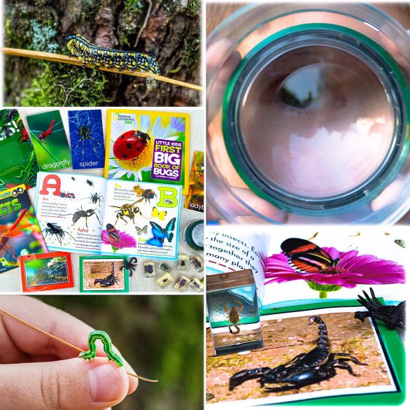 Bugs Insects and Arthropods Kids Unit Study