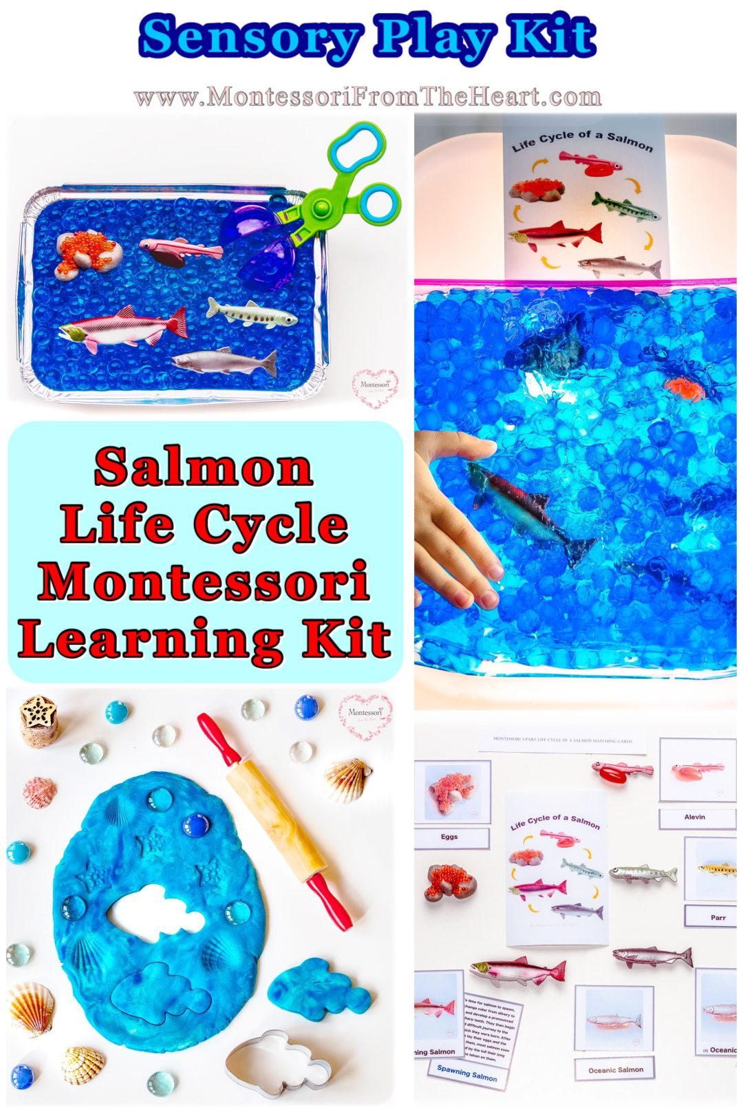 Salmon-LifeCycle-Sensory-Learning-Kit