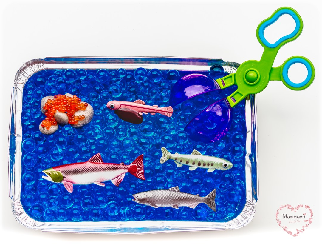 Salmon-Lifecycle-Hydrogels-Sensory-Bin