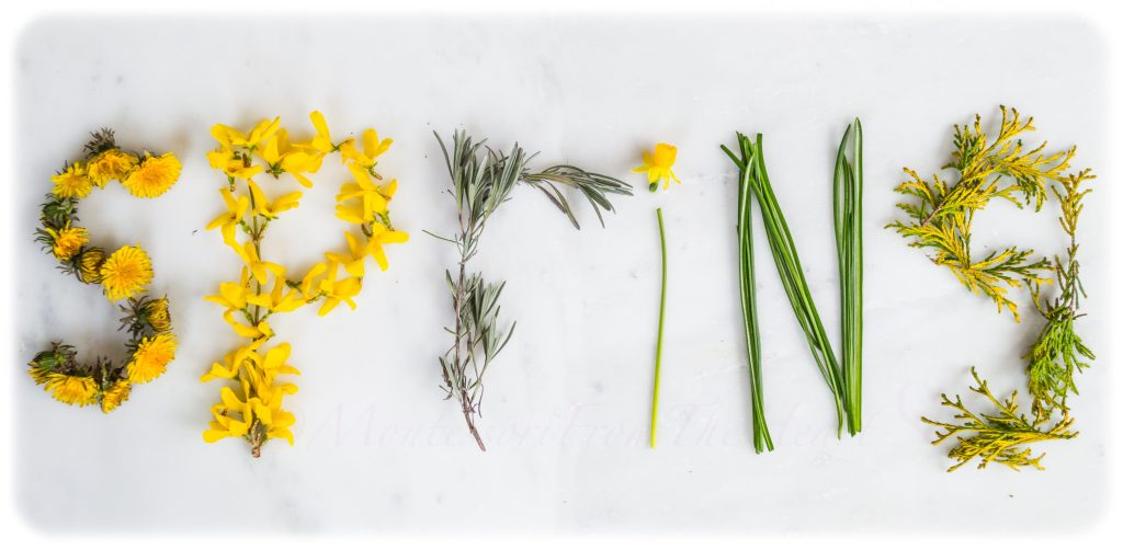 SPRING-CRAFT-SPELLED-WITH-NATURE-FINDS