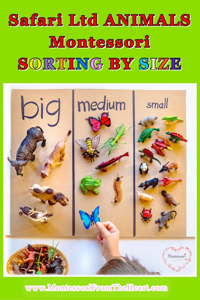 Safari-Ltd-Animal-Sorting-By-Size