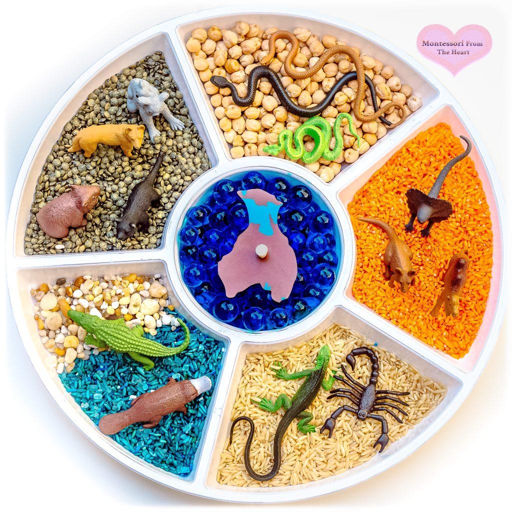 *Australia-Animals-Safari-Ltd-Snack-Tray
