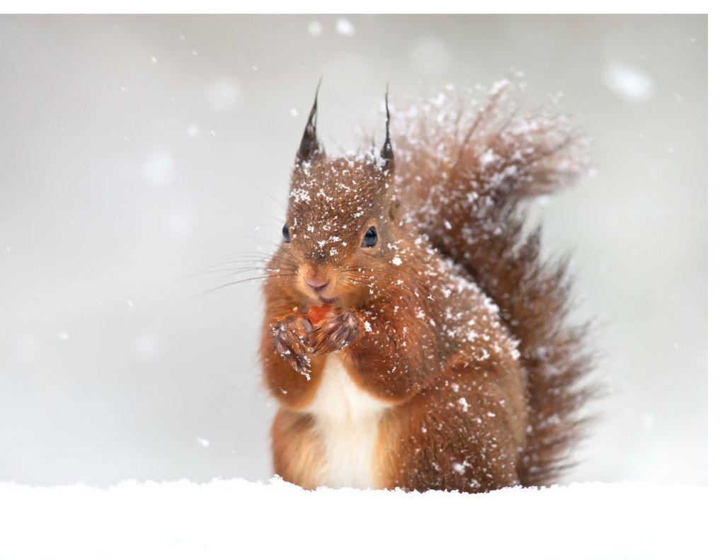 Jan 21 - Squirrel Appreciation Day