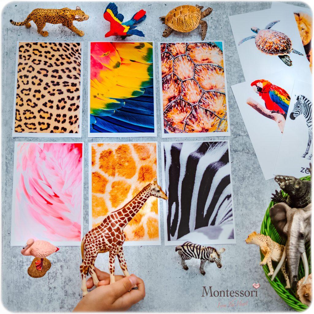 ANIMALS SKIN MATCHING Montessori Sensorial Activity
