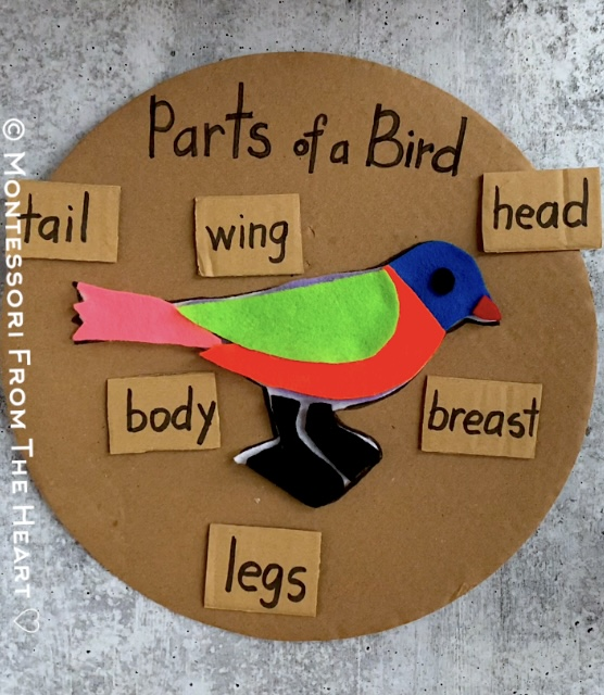 Montessori Zoology Puzzle Parts of a Bird