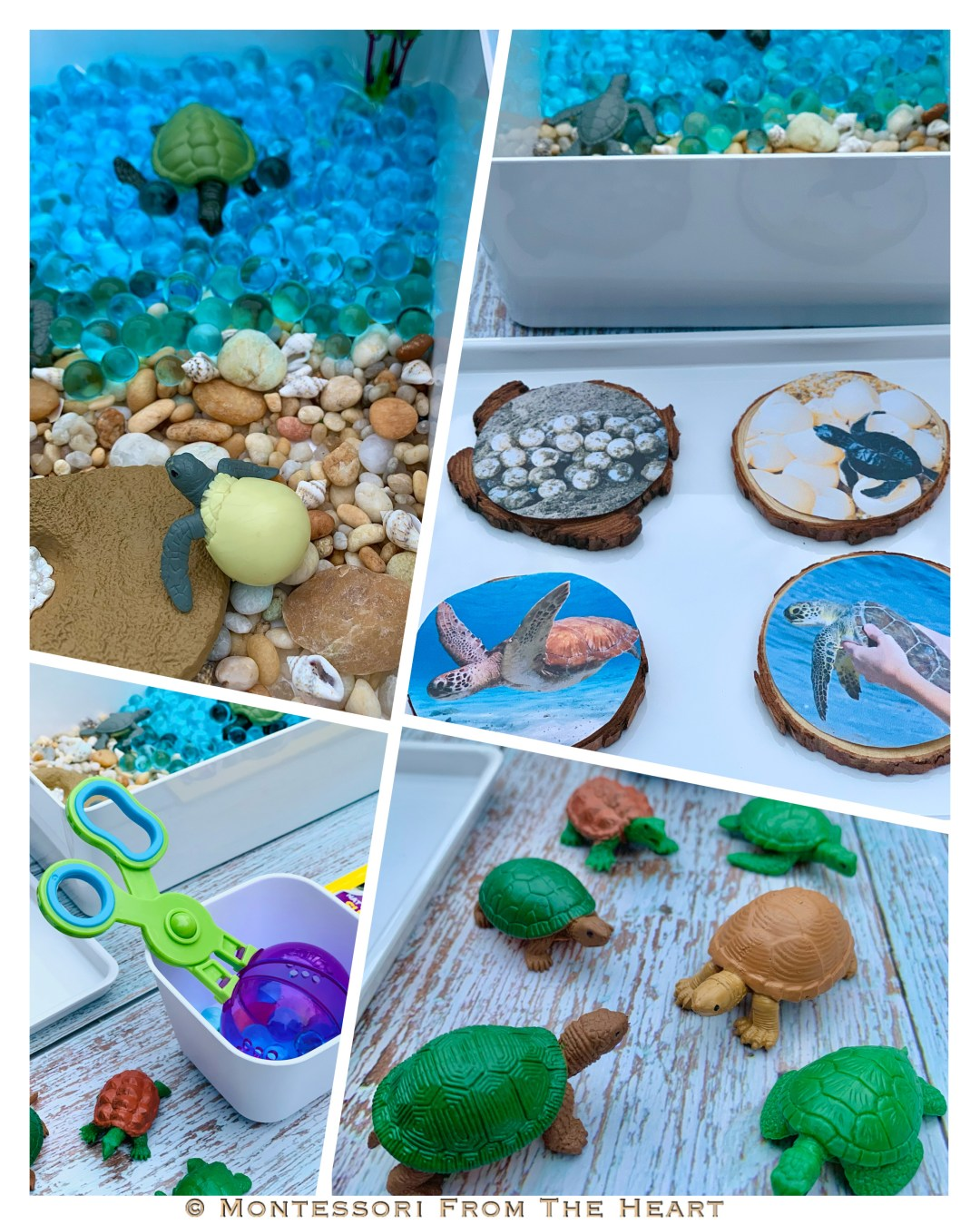 *Turtles Life-Cycle Learning Kit Collage