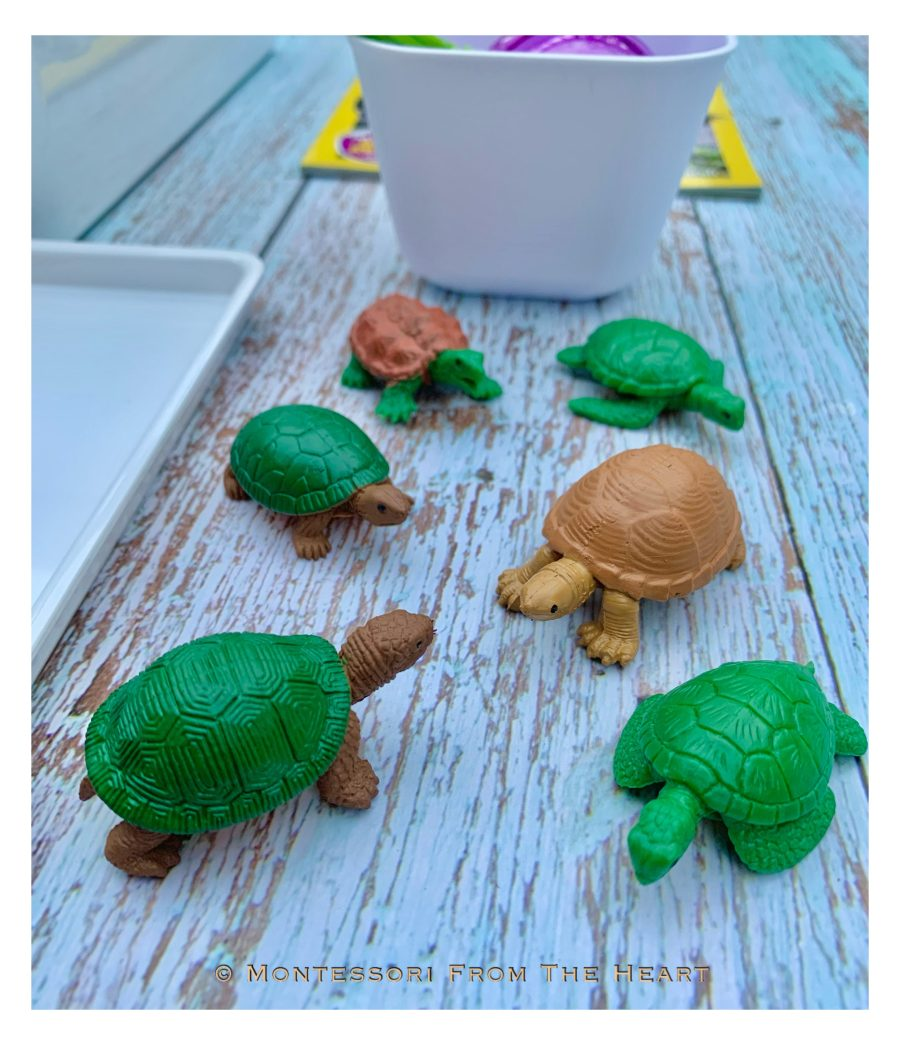 Turtles and Life-Cycle Learning Kit Types of Turtles