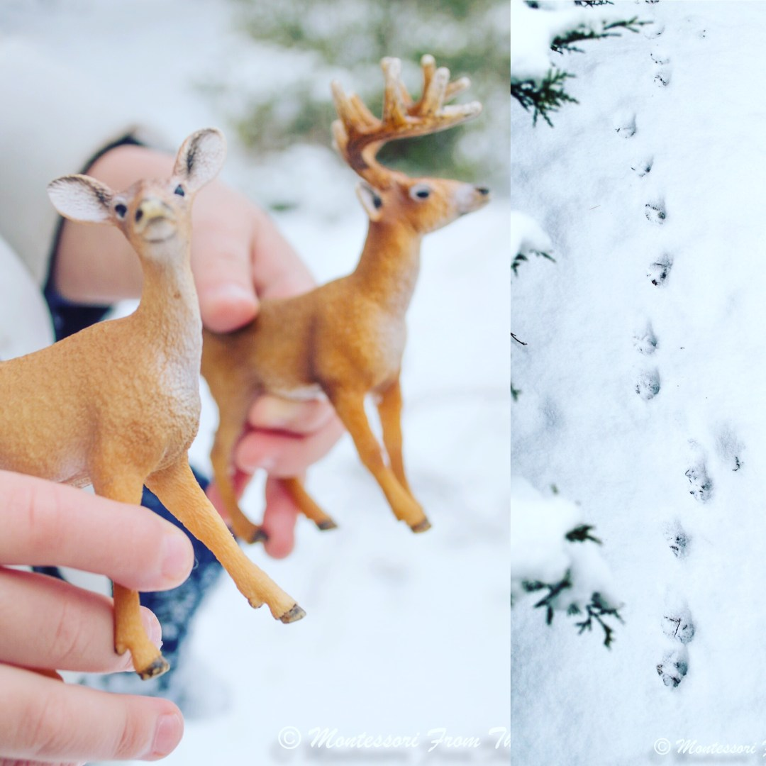 Deer tracks in real snow- double