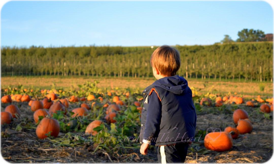 DSC_0039-001 Instg Adrian on a pumpkin field