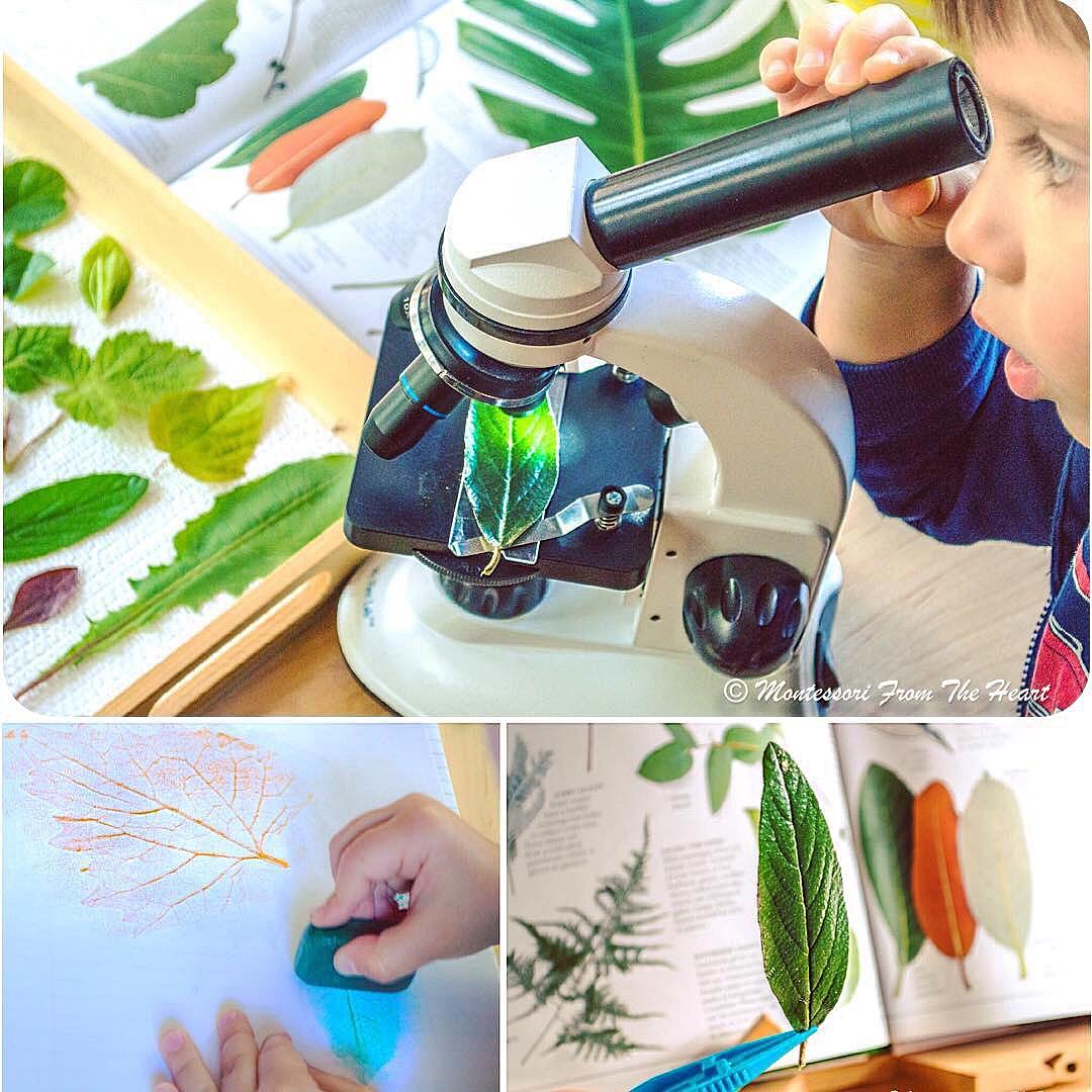 Botany Leaf Study