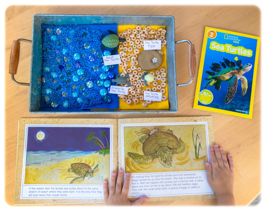 TURTLE HOMESCHOOL KIDS ACTIVITIES Sensory Play