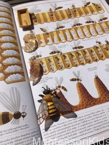 Piotr Socha: Včely