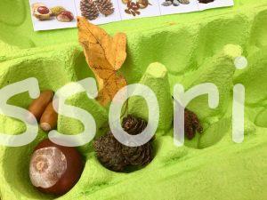 Montessori jeseň
