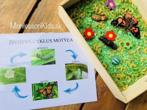 Životný cyklus motýľa